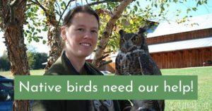 ways to protect native birds