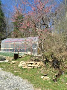 greenhouse and peach tree