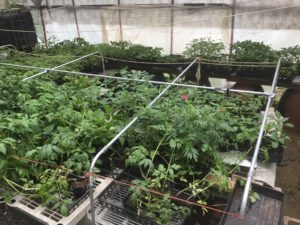plant starts from Sustainabillies