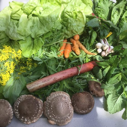summer CSA box garlic rhubarb carrot butter lettuce portobello oregano romaine