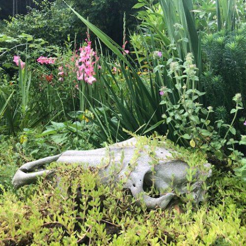 sustainabillies medicinal garden