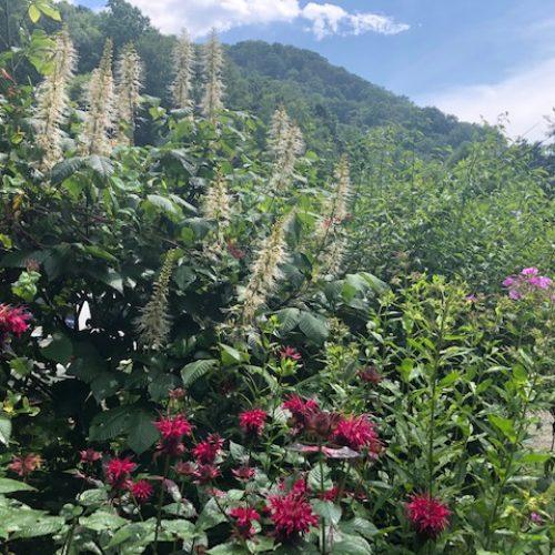 view around sustainabillies farm