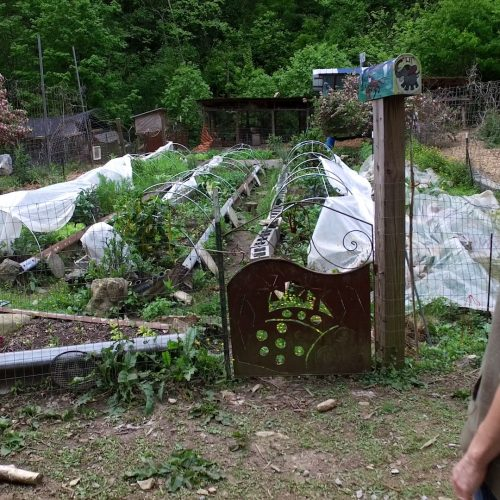 Sara of Sustainabillies looking at kitchen garden