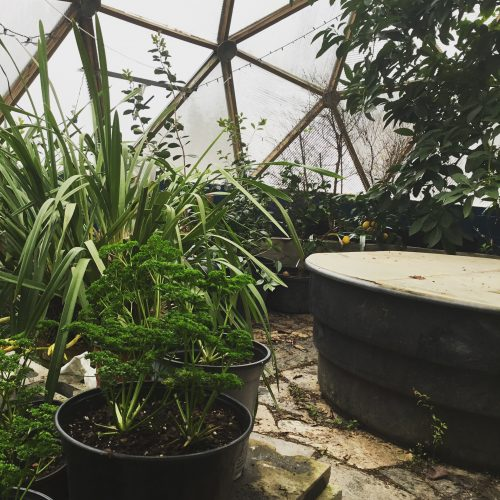 green plants fruiting in greenhouse dome